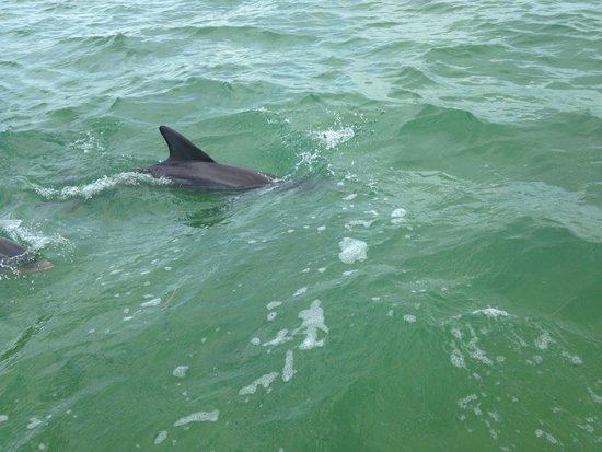 Florida Keys Jet Ski Rentals: Dolphins came to visit