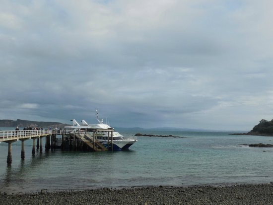 Tiritiri Matangi Island : The high-speed ferry from Auckland at the Tiritiri pier