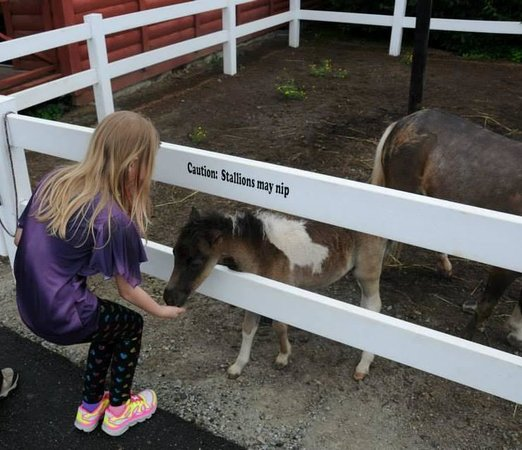 Land of Little Horses: feeding a baby miniature horse