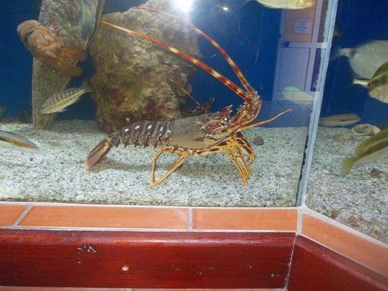 Aquaworld Aquarium & Reptile Rescue Centre : Jasper the lobster
