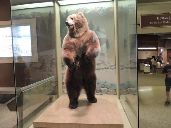 National Museum of Natural History: Esculturas bem realistas