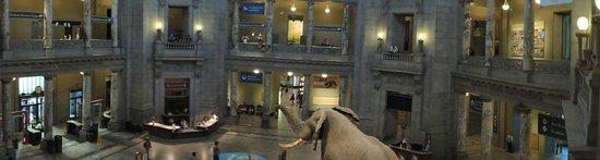 """National Museum of Natural History : panorâmica para quem viu o filme """"Uma noite no museu 2"""""""