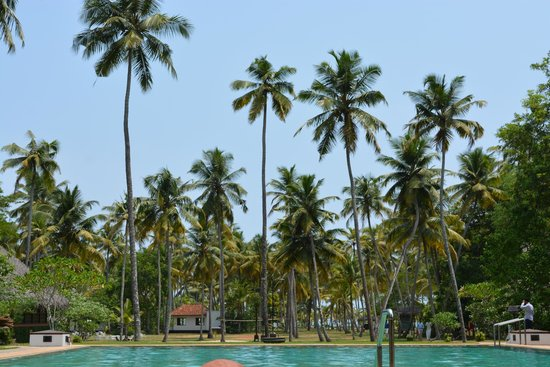 Marari Beach Resort : hotel pool.....