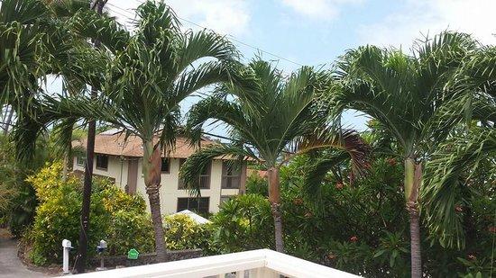 Hale O Pua Lani: View