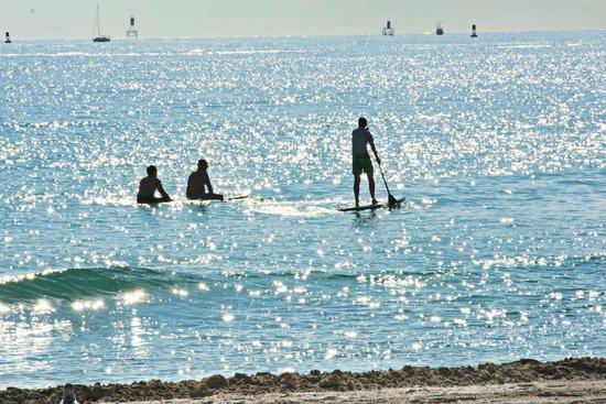 Hilton Bentley Miami/South Beach : gorgeous beach