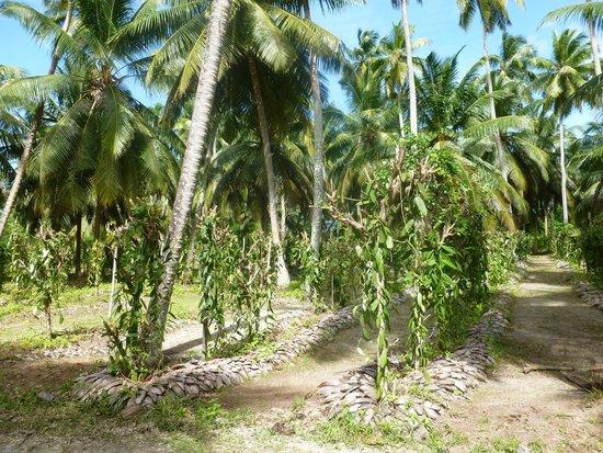 Casa De Leela: tolle Vanilleplantagen