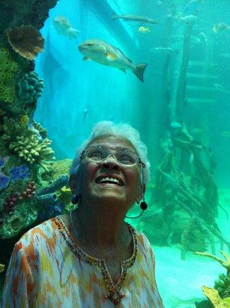 Guy Harvey Outpost, a TradeWinds Beach Resort: Mother dear enjoys tank