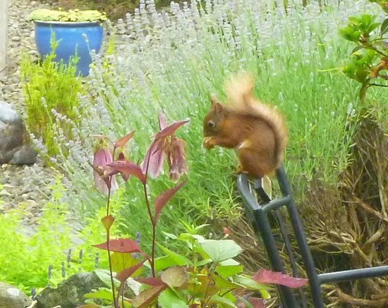 Spooney Green B&B : Red squirrel seen while having breakfast