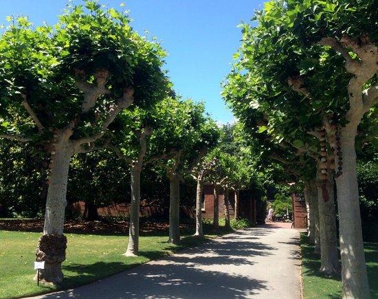 Filoli: nice trees