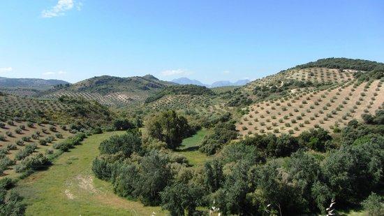 Casa Olea: View