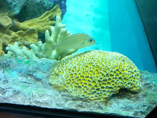 Guy Harvey Outpost, a TradeWinds Beach Resort: Fish in Tank in Rum Fish Grill
