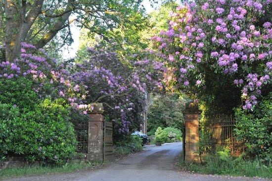 Mulberry Lodge: Einfahrt
