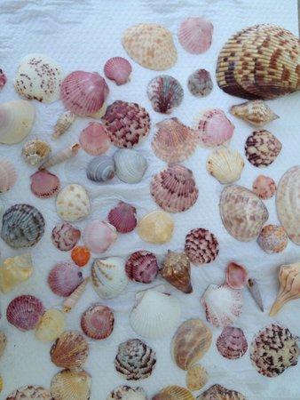 Blue Dolphin Cottages: Famous Sanibel shells.