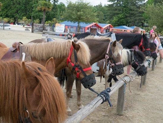 Les Ormes, Domaine & Resort: horses