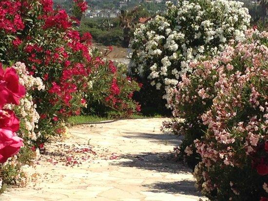 Helios Bay Hotel: Ogród