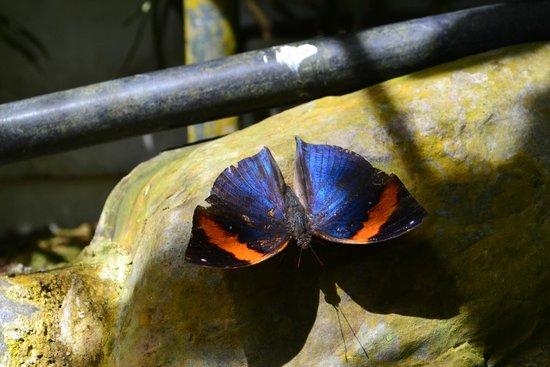 Entopia: colorful