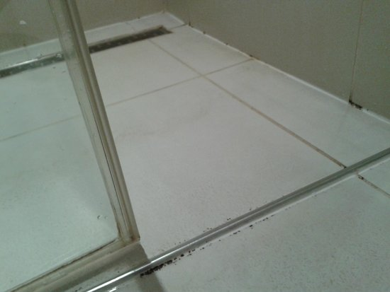 Sir Savigny Hotel: Schimmel in der Dusche