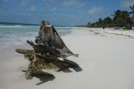 Suenos Tulum: Beach view