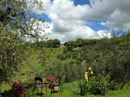 Agriturismo Bindozzino: uliveto e vigne sottostanti