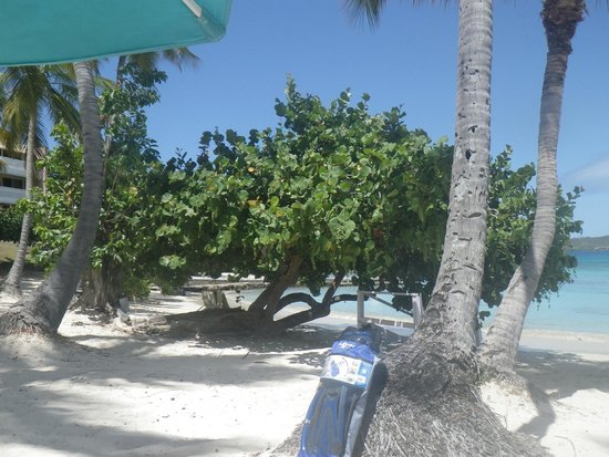 Secret Harbour Beach Resort : Beach shade tree