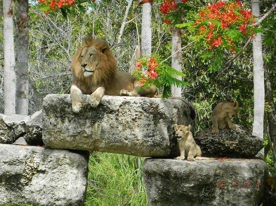Best Restaurants Near Miami Zoo