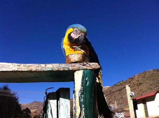 Santuario Animal de Cochahuasi: :)