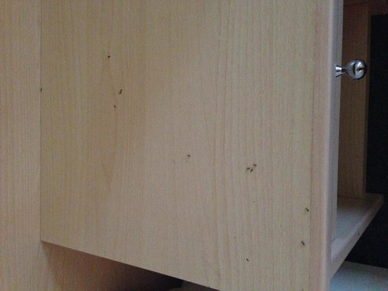 Pomorie Hotel: Ants on the bedside drawers