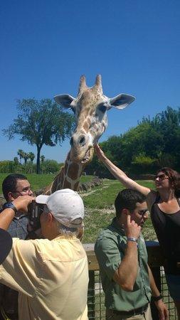 Jardines Busch: Serengeti safari, around $30- $40 extra