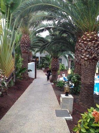 Suite Hotel Atlantis Fuerteventura Resort : Les allées du parc de l'Hotel : magnifique