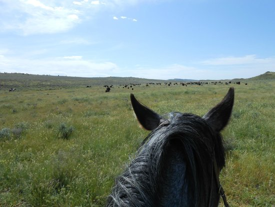 Lonesome Spur Ranch: out on the range!