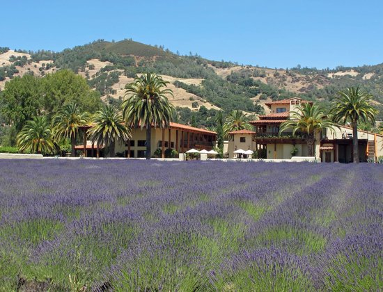 Ceago Estate Wines: Ceago Estates Winery-Lavender Field