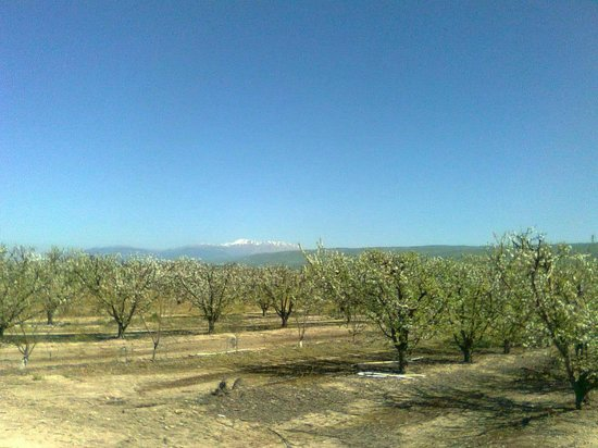 Orchards in Yesod Hamaala with view to Mount Hermon