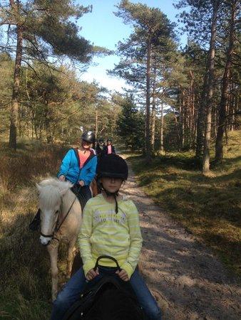 Kommandorgaardens Camping & Feriepark: .