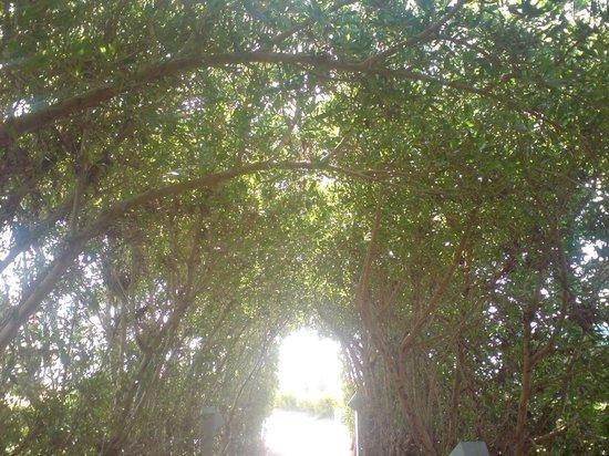 Aurora Oriental Resort Sharm El Sheikh: trees archway
