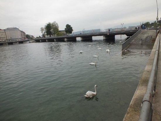 Lac Léman (Lac de Genève) : Lago Léman ou Genebra