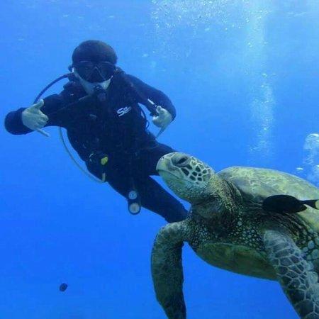Rainbow Scuba Hawaii: Scuba diving next to a sea turtle.