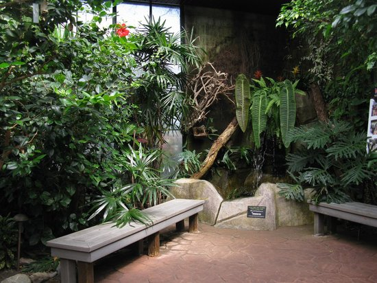 Koi Pond Picture Of Victoria Butterfly Gardens Central