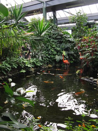 Victoria Butterfly Gardens: Pond with flamingos walking toward us