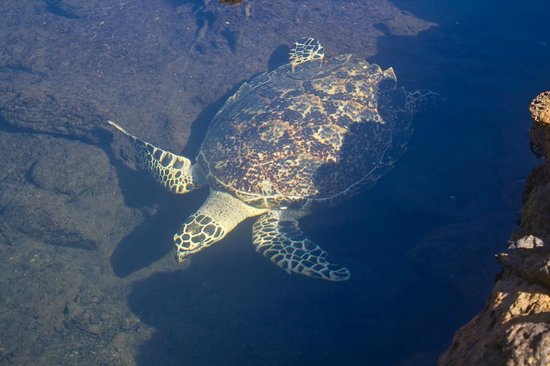 Swimming with Turtles: turtle