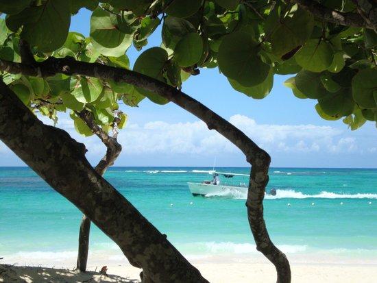 Grand Palladium Punta Cana Resort & Spa : Beach...