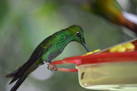 Reserva Curi-Cancha: Hummingbird Feeders--definite highlight