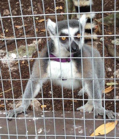 Bel Air Collection Xpu Ha Riviera Maya: Small animals had better enclosures