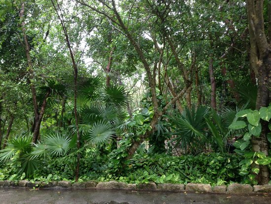 Bel Air Collection Xpu Ha Riviera Maya: Its nestled in the jungle!