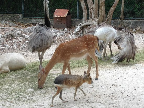 Bel Air Collection Xpu Ha Riviera Maya: The walk in zoo had lots of room!