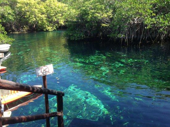 Bel Air Collection Xpu Ha Riviera Maya: Fabulous cenote for swimming!