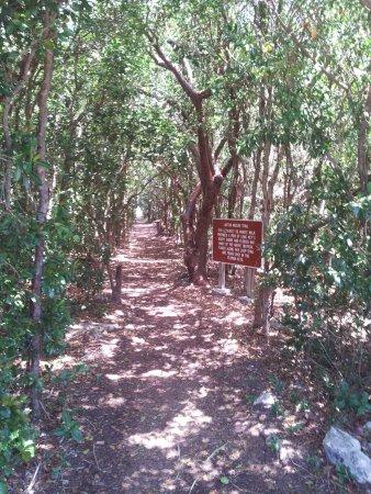 walking trail on site picture of long key state park florida keys rh tripadvisor com