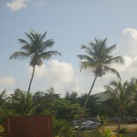 Great Bay Beach Resort, Casino & Spa : Palm trees everywhere!