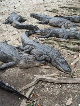Arkansas Alligator Farm & Petting Zoo: Lounging