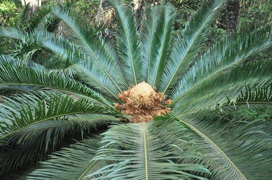Brumadinho, MG : Existem diversos tipos de palmeiras, de todo mundo.