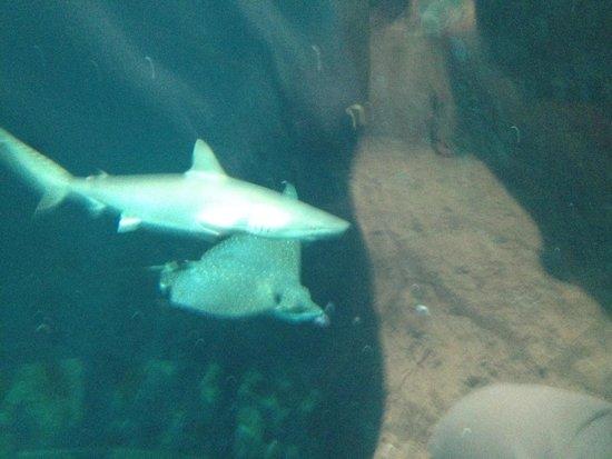 Shark Tank Picture Of Dallas World Aquarium Dallas